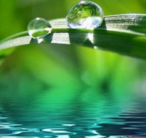 Hvad er kildevand, og hvordan adskiller det sig fra mineralvand?